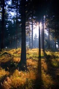 Thüringer Wald / Foto: Hans-Jürgen Steglich / pixelio.de