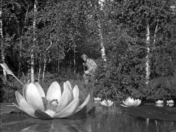 Alles Trick: Iwanuschka (Sergej Stoljarow) entdeckt eine Kröte im Innern einer großen Seerose / Quelle: Diamant