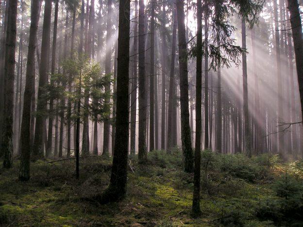 Der Wald in den Märchen der Brüder Grimm wird oftmals nur vage beschrieben. Im Märchenfilm zeigt er sich zwischen Postkartenidylle und archaischem Urwald / © Peter Habereder / Pixelio