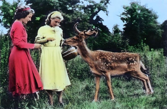 """""""Schneeweißchen und Rosenrot"""" (1955): Zahme Wildtiere gelten als Sinnbild eines friedlichen Waldes / © Studiocanal"""