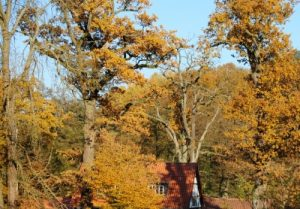 Reinhardswald: Im Herbst / © Hajo Rebers/pixelio.de