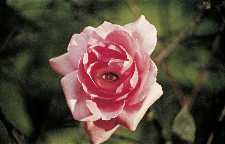 Eselshaut (1970): Via Doppelbelichtung erscheint ein Auge in der Rosenblüte / © Studiocanal